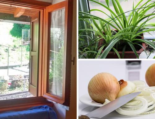 綠色植物、洋蔥、蠟燭對清除甲醛有效嗎?
