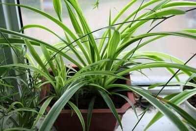 除甲醛方法比較 植物
