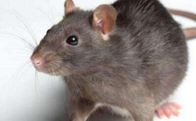 滅蟲服務 除鼠患