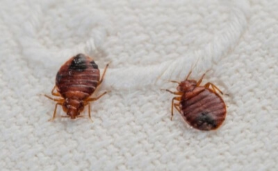滅蟲服務 除床蚤