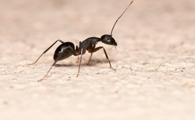滅蟲服務 除螞蟻